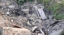 Nonantola, resti di alberi tagliati nel fossato a lato di via Molza